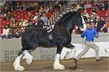 DrPepper_Running_WCS11-SupremeHorse